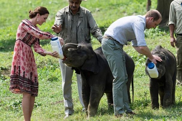 Kate e príncipe William alimentam elefantinhos (Foto: Getty Images)