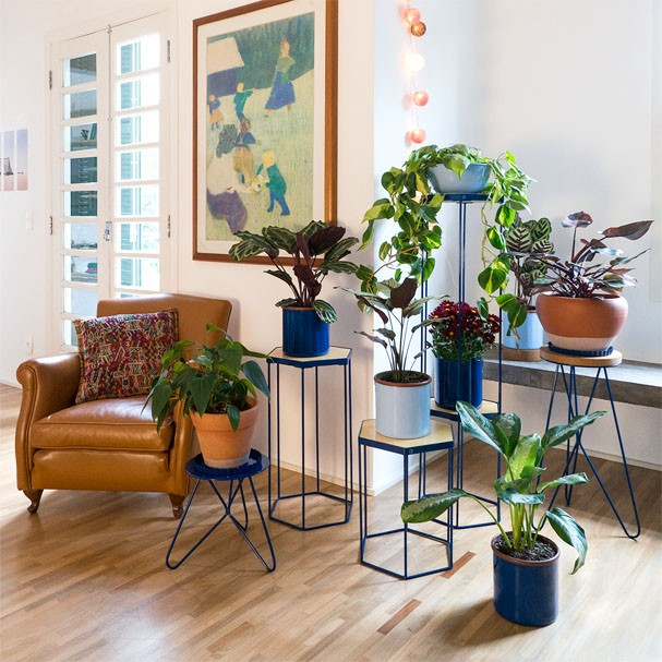 Plantas para dentro de casa (Foto: Divulga)