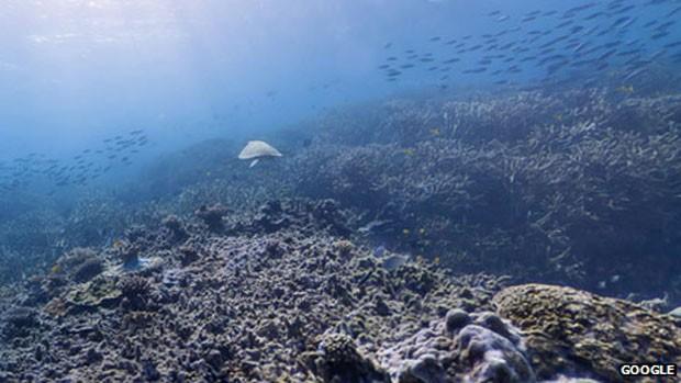 Imagem submarina feita com câmera do Google (Foto: BBC)