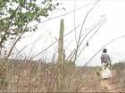 Agricultores alimentam animais com erva daninha durante a seca em PE