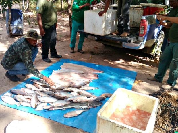Mais de 140 kg de pescado irregular foram apreendidos e doados à comunidade (Foto: Divulgação/Sema-MT)