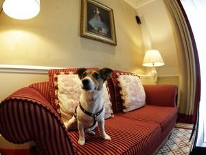 A cachorra Ella no sofá de um dos quartos adaptados para cães (Foto: Leonhard Foeger/Reuters)