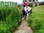 Passarela invadida por vegetação causa problemas em Praia Grande, SP