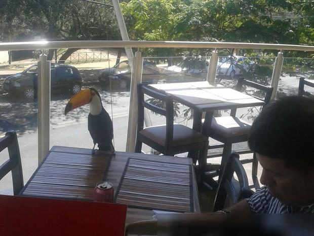 Tucano almoçou ao lado do cliente em restaurante de Sorocaba (Foto: Marcia de Oliveira Brito/ Arquivo pessoal)