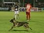 """Cachorro invasor """"dá ajudinha"""" e Caldense vence o Villa Nova no fim"""