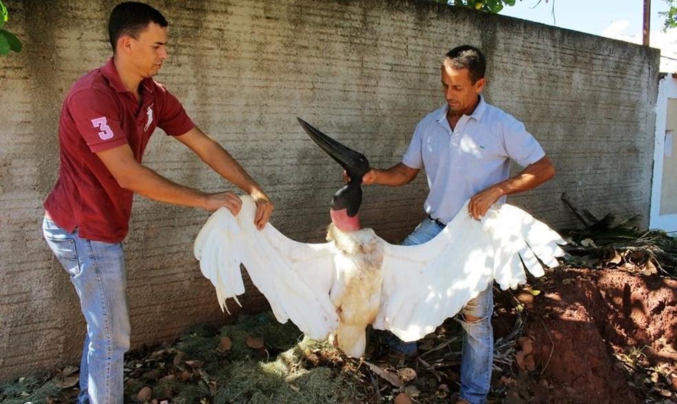 ONG diz que tuiuiú foi morto a tiro em Pontal do Araguaia (Foto: Edevilson Arneiro)