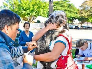 Vacinação antirrábica continua neste fim de semana (Foto: Divulgação/Prefeitura de Rio Claro)