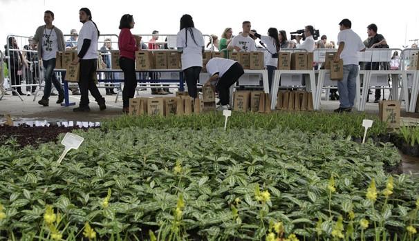 Verdejando nasceu do desejo de tornar São Paulo menos cinza e mais sustentável (Foto: Fernando Pilatos/Globo)