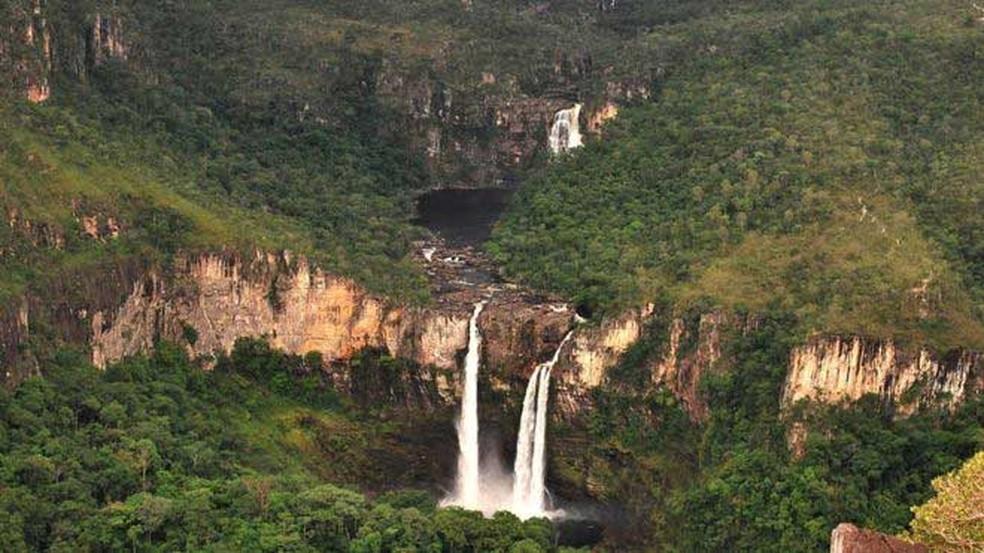 Plantas do cerrado atuam como uma imensa esponja, recarregando aquíferos que abastecem rios e reservatórios  (Foto: Nelson Yoneda/ICMBio/ BBC)