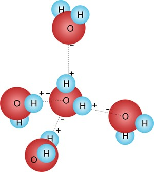 Molécula de água funciona como solvente universal  (Foto: Colégio Qi)