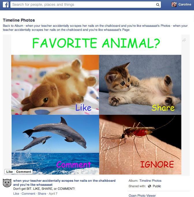 Facebook mostrará menos spam (Foto: Reprodução)