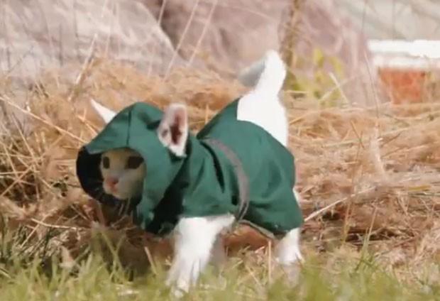 Paródia mostra gatinhos como assassinos (Foto: Reprodução/YouTube/Mr.TVCow)