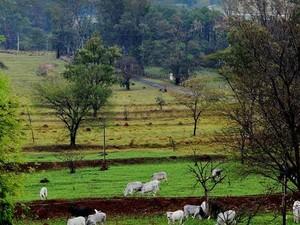 Segundo lugar foi fotografia de paisagem rural  (Foto: Márcio Salata)