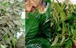 Veja como preparar banhos de folha (Lílian Marques/ G1)