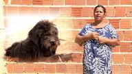 Conheça três histórias de cães que se recuperaram com a ajuda da Orcileni