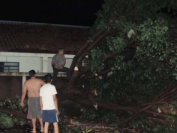 Vizinhos se juntaram para cortar árvores que tombou em frente a uma residência (Foto: Mariane Peres/G1)