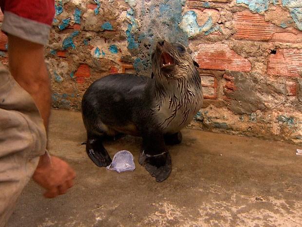Moradores acham lobo marinho no bairro de Roma, em Salvador (Foto: Reprodução/ TV BA)