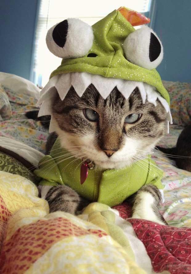 O gatinho vestido de sapo (Foto: Reprodução/Facebook)