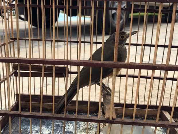 Pássaros vão ser encaminhados para o Cetas e depois libertados nas reservas da Grande João Pessoa (Foto: Walter Paparazzo/G1)