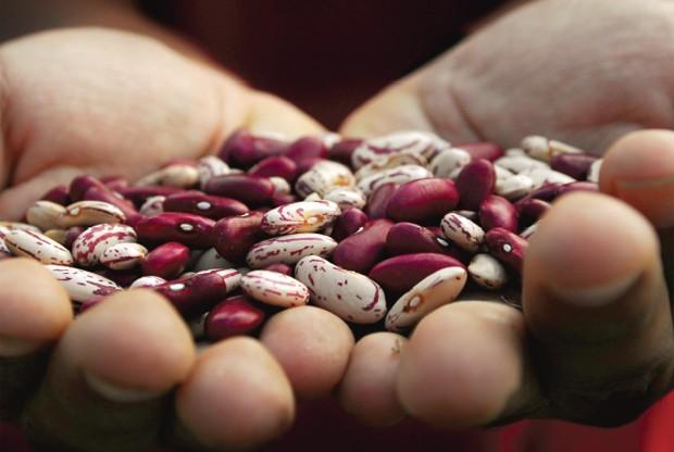 Pesquisadores descobriram 30 variedades de feijão que sobreviveriam ao aquecimento global (Foto: CGIAR/Divulgação)