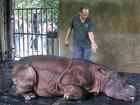 Espécie rara de rinoceronte recebe cuidados em reserva da Malásia