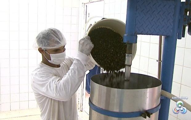 Produtores serão capacitados no processo de extração do suco do açaí para garantir a qualidade do fruto (Foto: Bom Dia Amazônia)