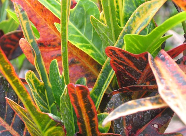 10-motivos-para-ter-plantas-em-casa (Foto: Flickr/CCommons)