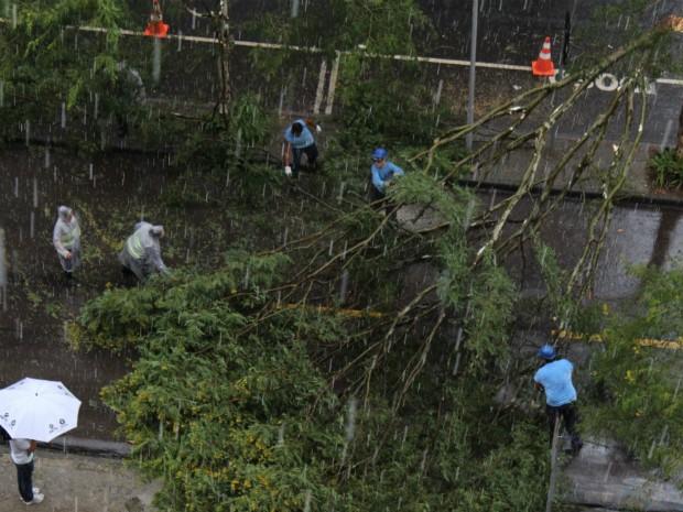 Tempestade derrubou árvore da Rua Padre Anchieta, no bairro Bigorrilho, na tarde desta quarta-feira (5) (Foto: Miguel Basso Locatelli)
