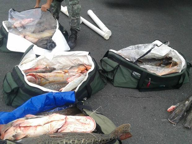 Carnes de peixe e de jacaré foram apreendidas dentro de avião no Pantanal (Foto: Divulgação/Ciopaer)