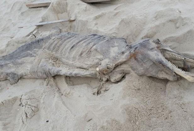 Carcaça de criatura misteriosa foi encontrada em praia de Toms River (Foto: Reprodução/Facebook/Professor Sak)
