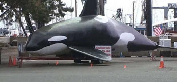 Cidade do Oregon vai usar orca falsa para afugentar leões-marinhos (Foto: Reprodução/YouTube/USA Today)