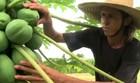 Agricultor aposta em plantio agroecológico (Reprodução/TV Gazeta)