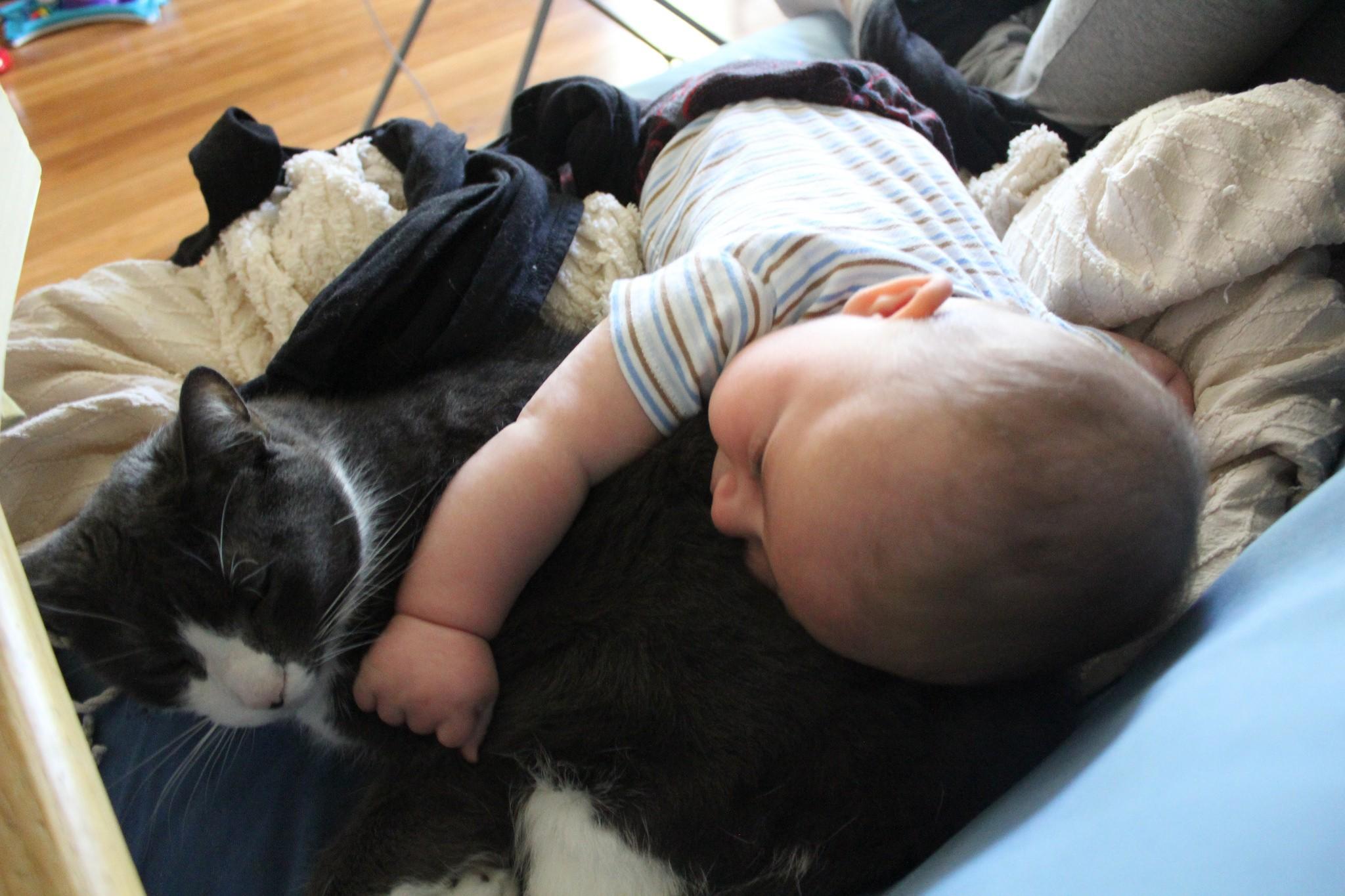 Bebê e gato (Foto: Flickr/ Quinn Dombrowski/ Creative Commons)