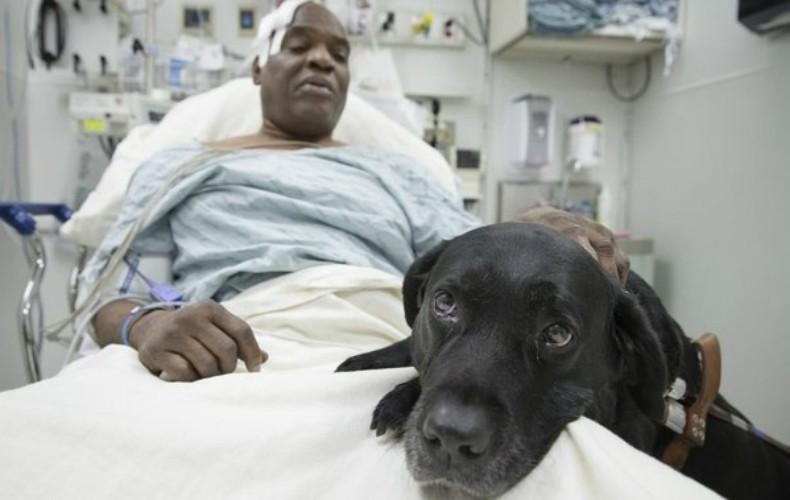 Cão-guia salva cego no metrô de NY (Foto: Reprodução/Indiegogo Crowdfunding Platform)