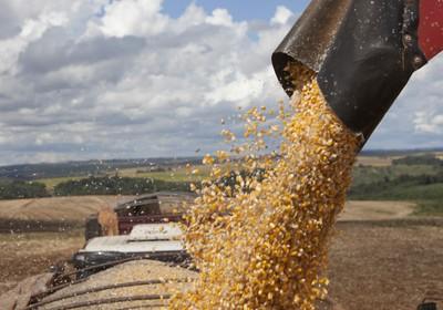 cultivos_anuais_fazenda_sustentavel (Foto: Marcelo Min )