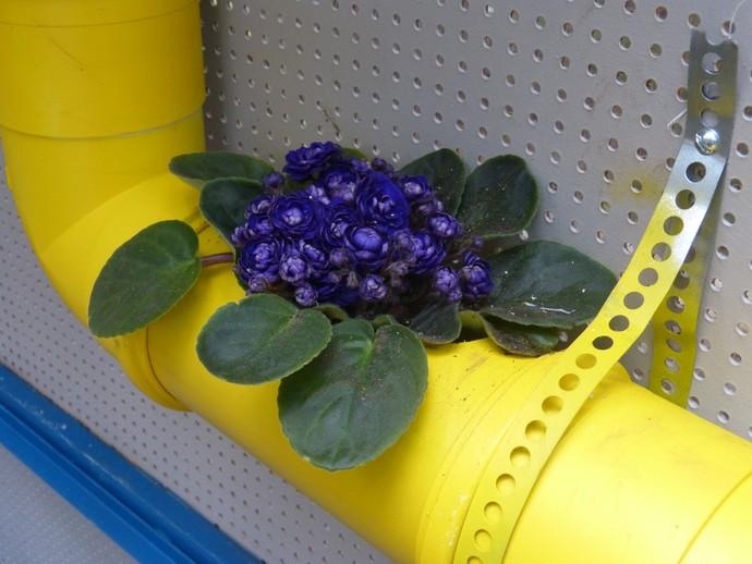 Violetas são recomendadas para o jardim vertical (Foto: Anny Ribeiro/Gshow)