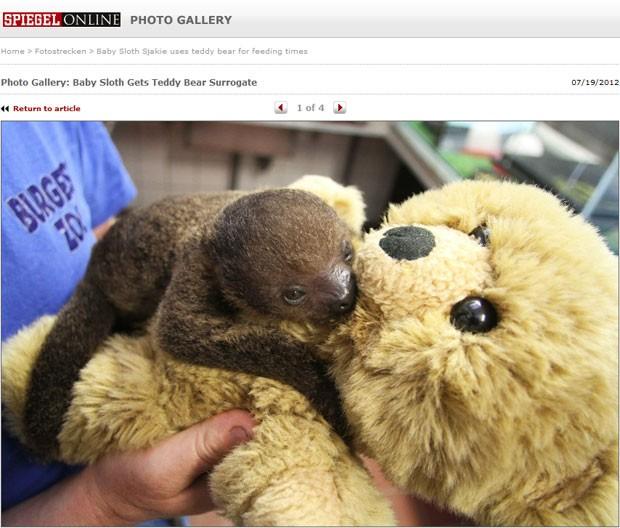 Natureza - Filhote de bicho-preguiça  agarra  urso de pelúcia em zoo ... d0894abba58