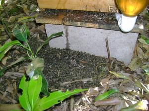 Morte de abelhas pode ter sido causada por fumace (Foto: Eduardo Perez/Arquivo Pessoal)