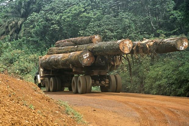 Um caminhão leva troncos de árvores ao porto de Bata, no litoral, de onde serão exportados (Foto: Haroldo Castro/Época )