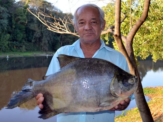 Antonio Roberto Ferreira mostra peixe de 3,5 quilos pescado no Rio Piracicaba (Foto: Fernanda Zanetti/G1)