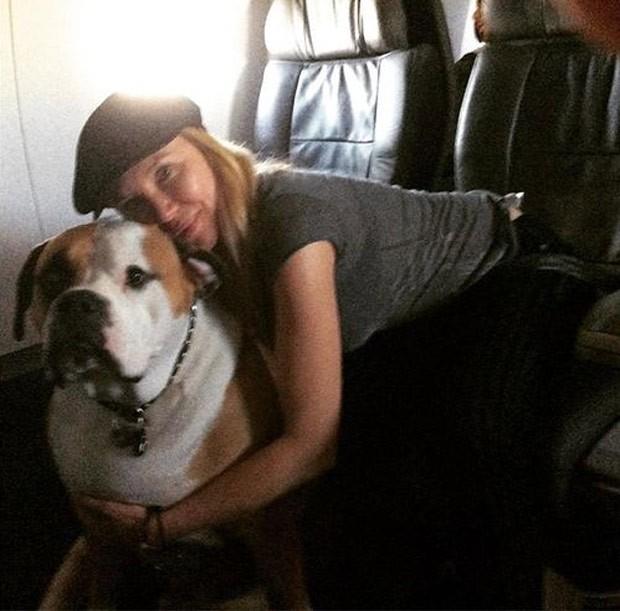 Por conta de seu tamanho, cão chamado Hank só viaja de primeira classe (Foto: Reprodução/Instagram/hanktheworldtraveler)