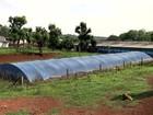 Criadores de Santa Catarina investem na captação de água da chuva