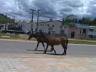 Cavalos são flagrados por internauta na rodovia BR-459 em Itajubá, MG
