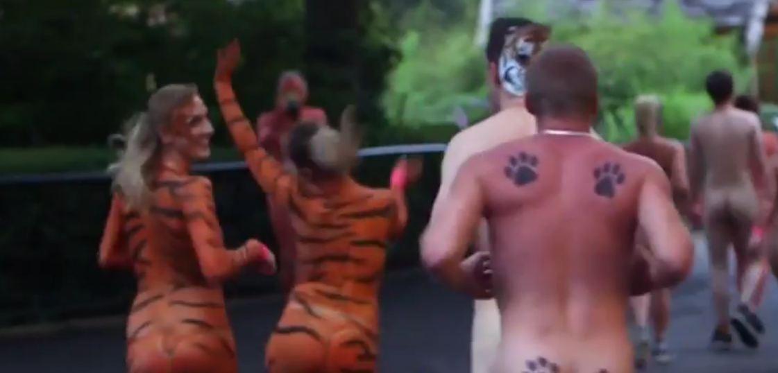 A corrida Streak for Tigers (Foto: Reprodução)