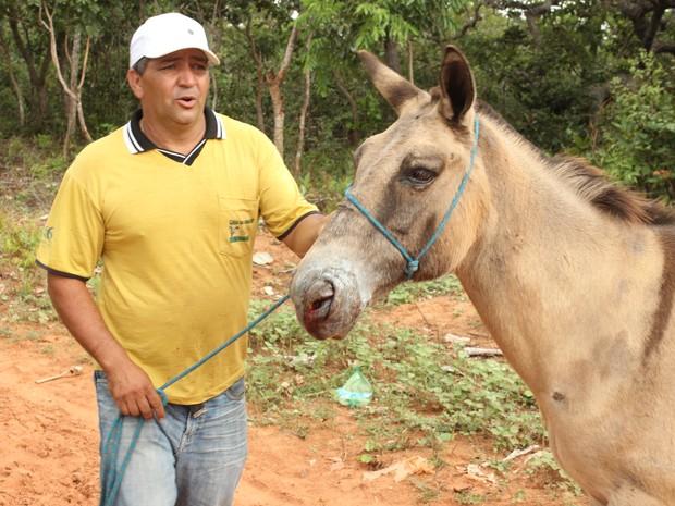 Nesta terça-feira (24) o animal apresentava inchaço na lesão, mas já conseguia se alimentar. (Foto: Valdivan Veloso/G1)
