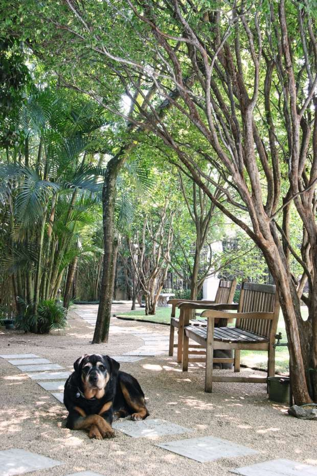Rottweiler descansando em quintal arborizado com cadeiras de madeira (Foto: Evelyn Müller/Editora Globo)