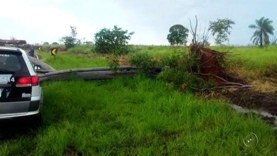 Chuva forte derruba árvores na região noroeste paulista