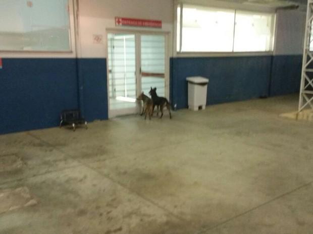 Cachorros ficam aguardando paciente do lado de fora (Foto: Fábio Santos/ Arquivo pessoal )