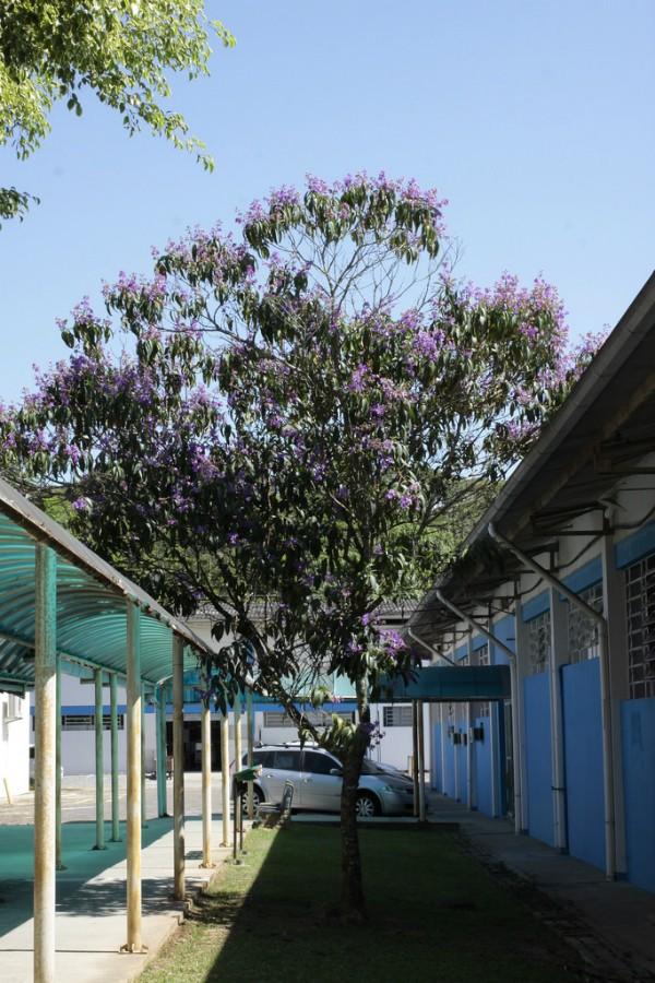 Campus de Joinville oferece 300 vagas (Foto: Jonas Pôrto/Udesc)