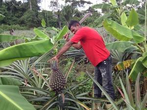abacaxi gigante acre 1 (Foto: Duaine Rodrigues/G1)